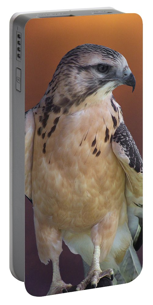 Light-morph Immature Swainson's Hawk Portable Battery Charger featuring the photograph Light Morph Immature Swainsons Hawk by Ernie Echols