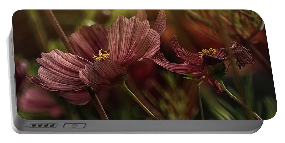 Flowers Portable Battery Charger featuring the photograph Light On The Cosmos by Stephen Barrie