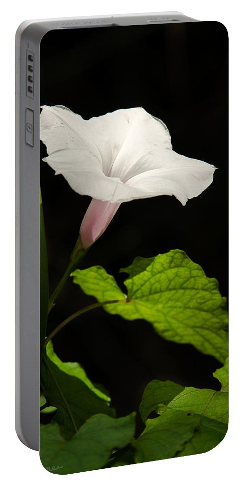 Flower Portable Battery Charger featuring the photograph Light Out Of The Dark by Christopher Holmes