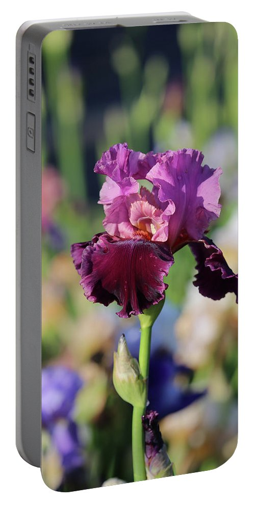 Lavendar Portable Battery Charger featuring the photograph Lilac Iris In Bloom by Theresa Campbell