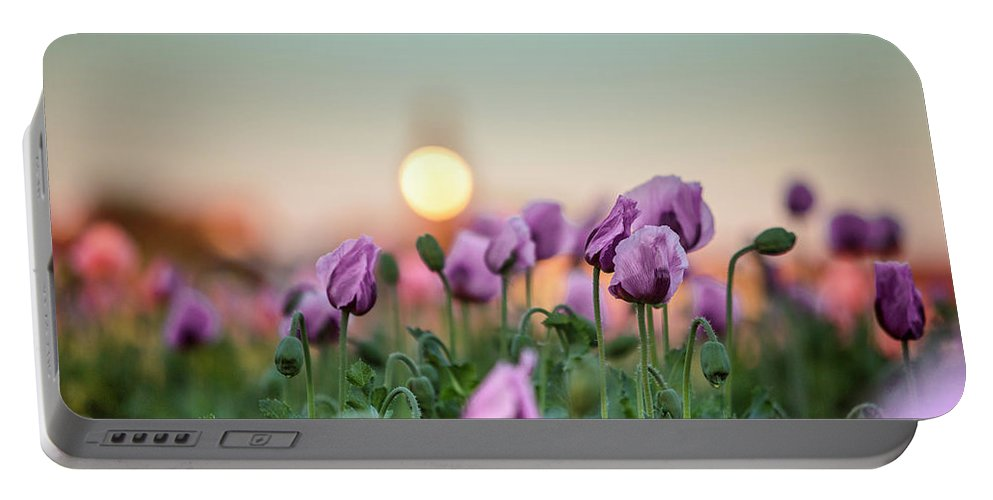 Poppy Portable Battery Charger featuring the photograph Lilac Poppy Flowers by Nailia Schwarz