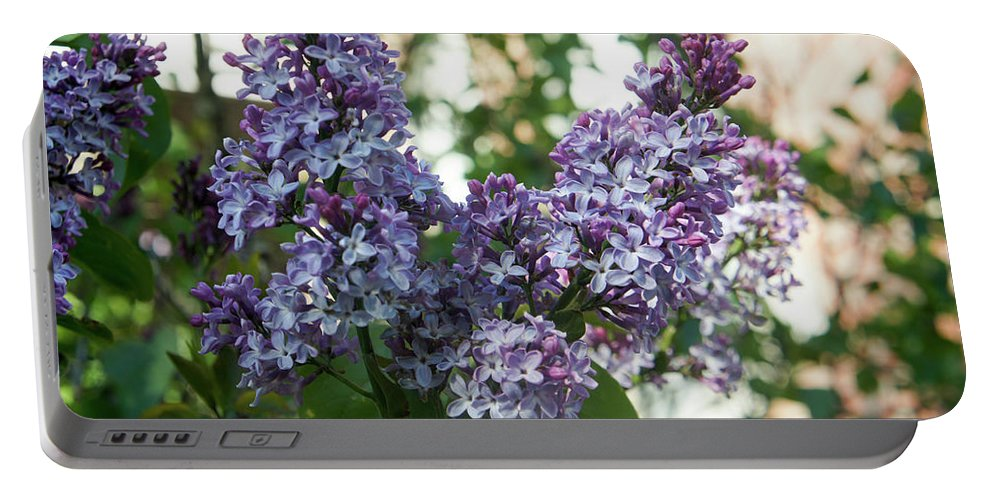 Lilac Portable Battery Charger featuring the photograph Lilacs In Spring by Adam Gladstone