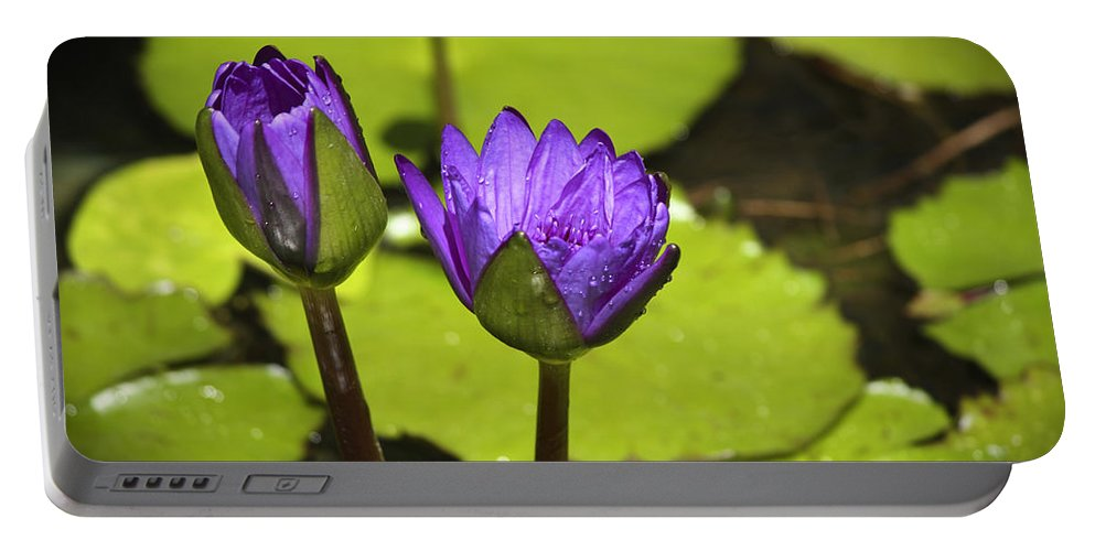 Water Portable Battery Charger featuring the photograph Lilly Buds by Teresa Mucha