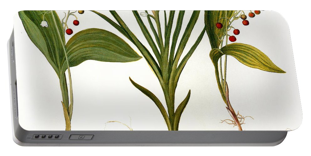 1613 Portable Battery Charger featuring the photograph Lily-of-the-valley by Granger