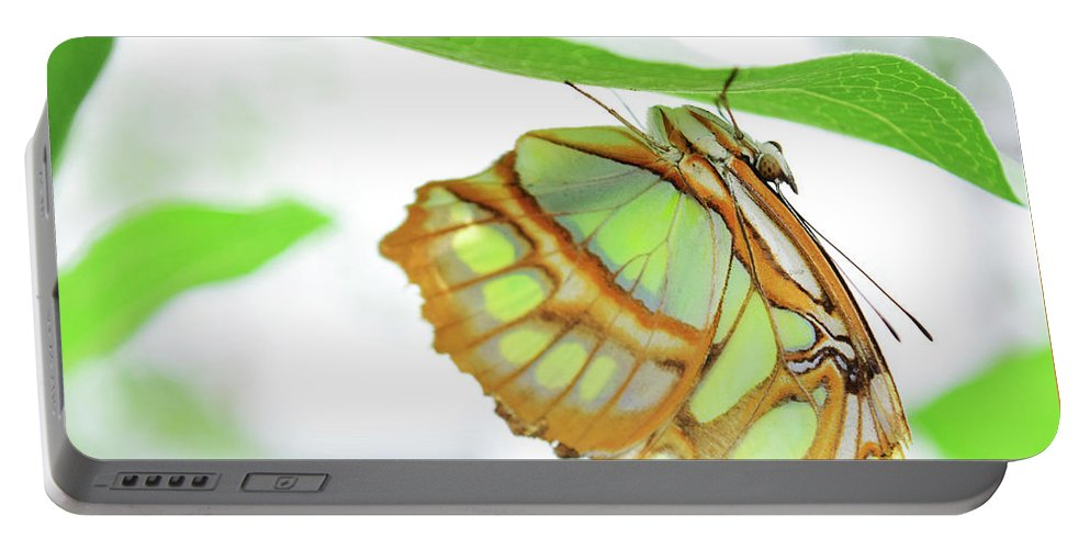Butterfly Portable Battery Charger featuring the photograph Lime Greens by Sydney Thompson