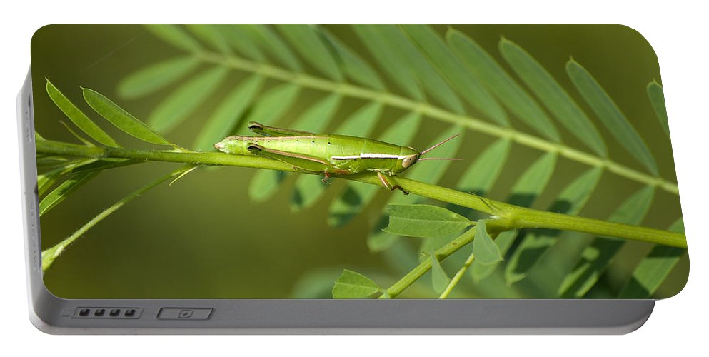 Grasshopper Portable Battery Charger featuring the photograph Linear Winged Grasshopper by Kenneth Albin