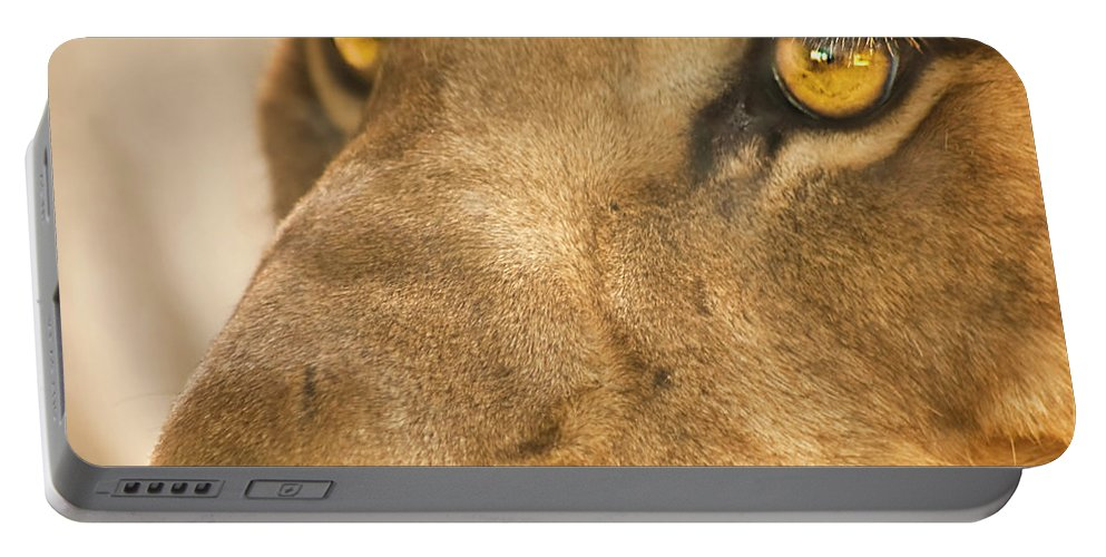 Lion Portable Battery Charger featuring the photograph Lion Face by Carolyn Marshall