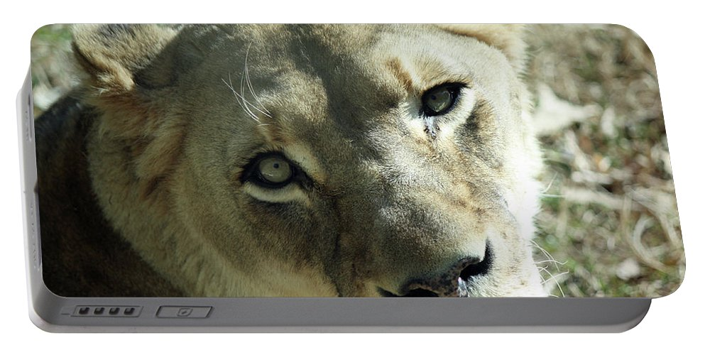 Maryland Portable Battery Charger featuring the photograph Lioness Up Close by Ronald Reid