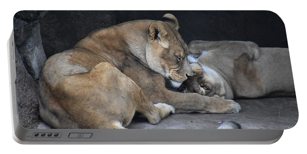 Lion Portable Battery Charger featuring the photograph Lioness's Playing 2 by Flo McKinley