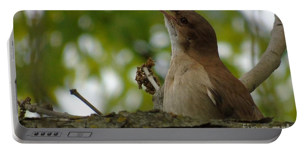 Birds Portable Battery Charger featuring the photograph Listen To My Song by Silvana Miroslava Albano