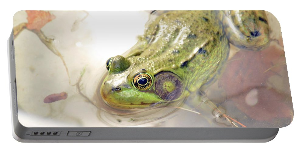 Bullfrog Portable Battery Charger featuring the photograph Lithobates Catesbeianus Or Rana Catesbeiana by Love Images