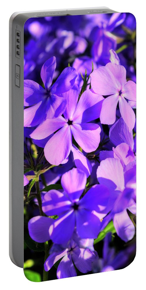 Lithodora Diffusa Portable Battery Charger featuring the photograph Lithodora Diffusa by FineArtRoyal Joshua Mimbs