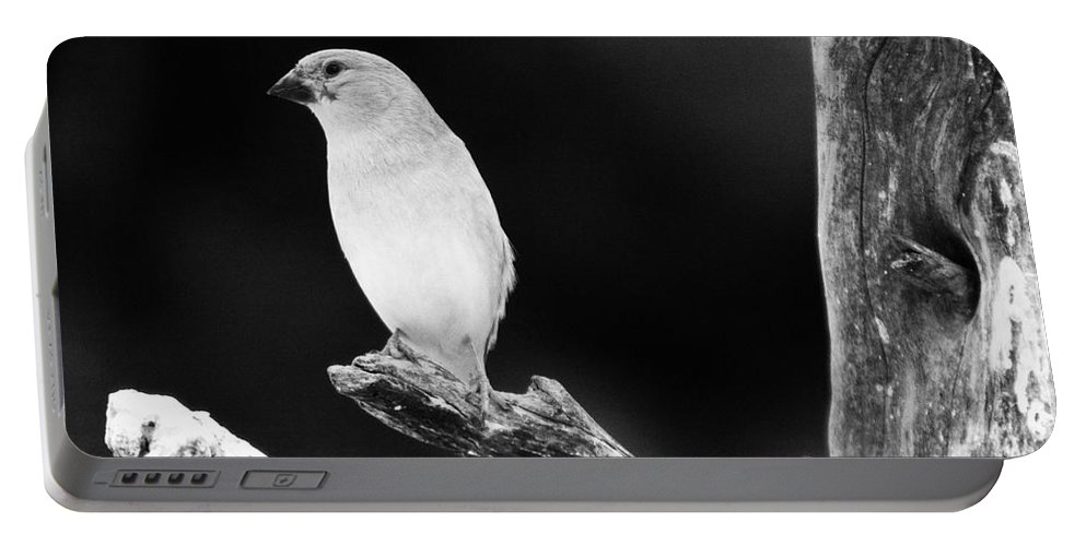 Bird Portable Battery Charger featuring the photograph Little Bird by Angel Ciesniarska