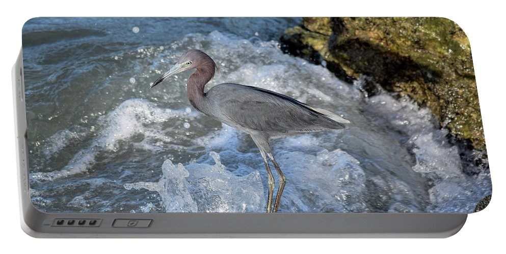 Little Blue Heron Portable Battery Charger featuring the photograph Little Blue And A Splash by William Tasker