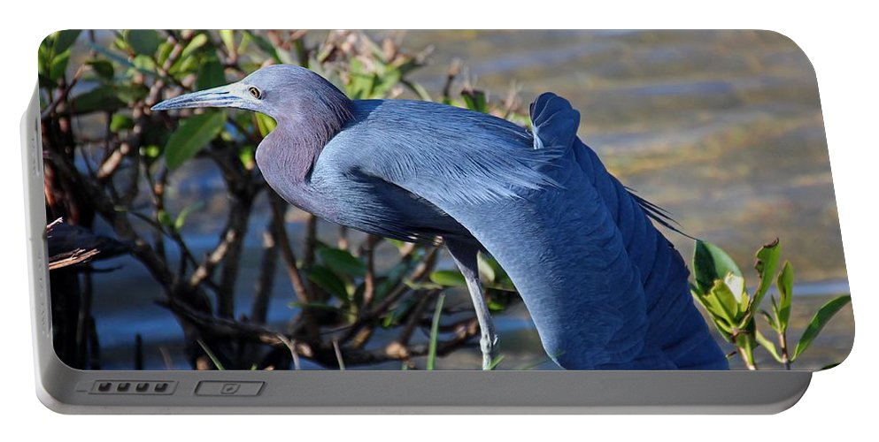 Little Blue Heron Portable Battery Charger featuring the photograph Little Blue Heron Sunbathing by Michiale Schneider