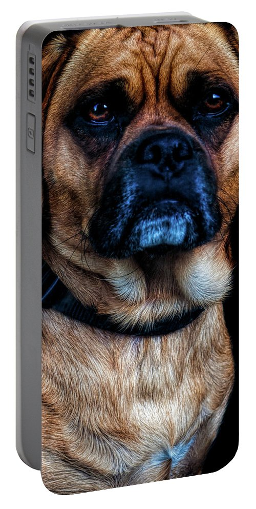 Dog Portable Battery Charger featuring the photograph Little Dog Big Heart by Bob Orsillo