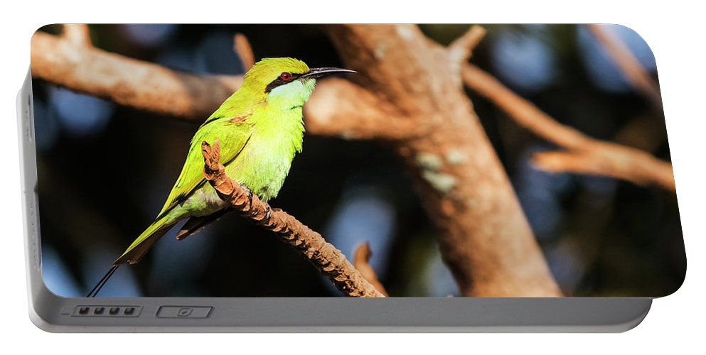 Bee Eater Portable Battery Charger featuring the photograph Little Green Bee Eater On A Branch by Vishwanath Bhat
