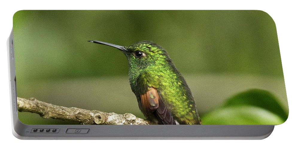 Hummingbird Portable Battery Charger featuring the photograph Little Hummingbird by Heiko Koehrer-Wagner