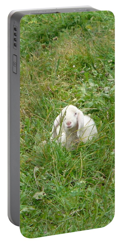 Lamb Portable Battery Charger featuring the photograph Little Lamb by Valerie Ornstein