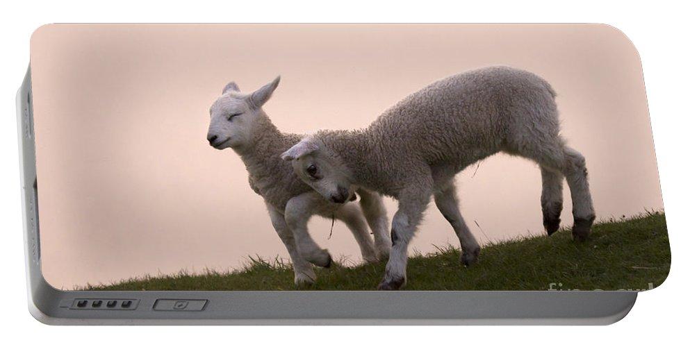 Prancing Lamb Portable Battery Charger featuring the photograph Little Lambs by Angel Ciesniarska