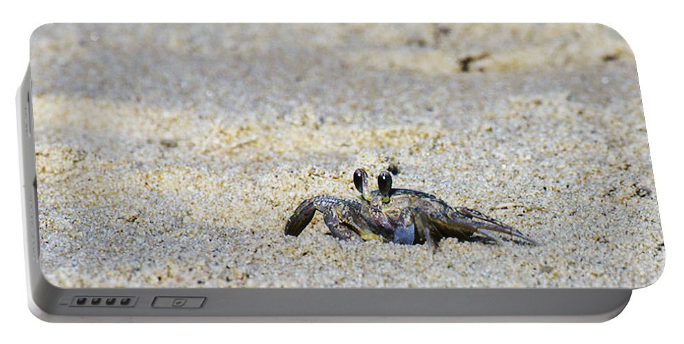 Crab Art Print Portable Battery Charger featuring the photograph Little Nag's Head Crab by Patricia Griffin Brett