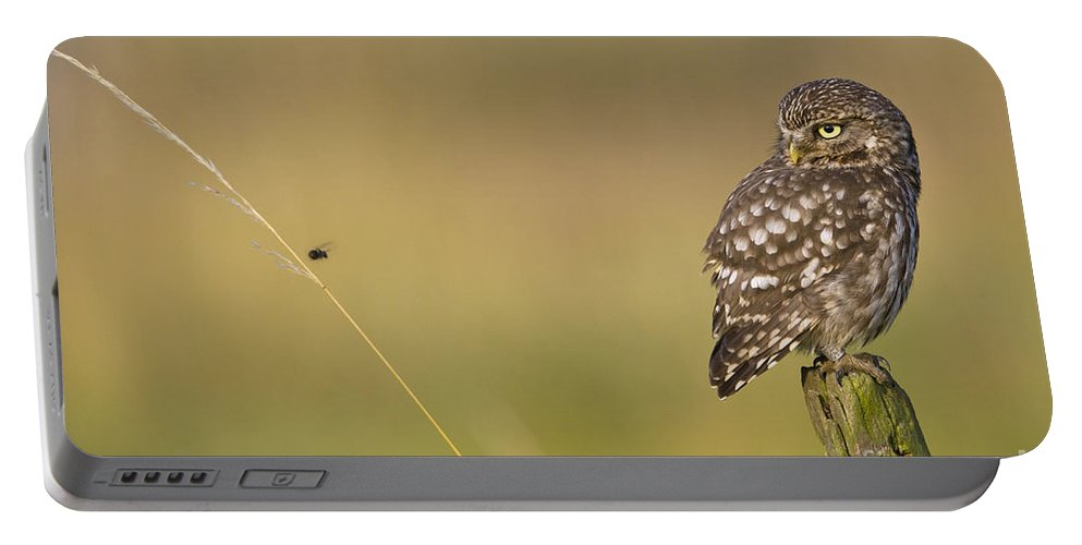 Little Owl Portable Battery Charger featuring the photograph Little Owl by Jean-Louis Klein & Marie-Luce Hubert