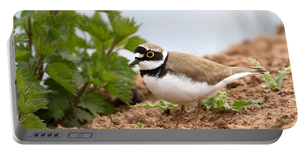 Little Ringed Plover.plover Portable Battery Charger featuring the photograph Little Ringed Plover by Bob Kemp