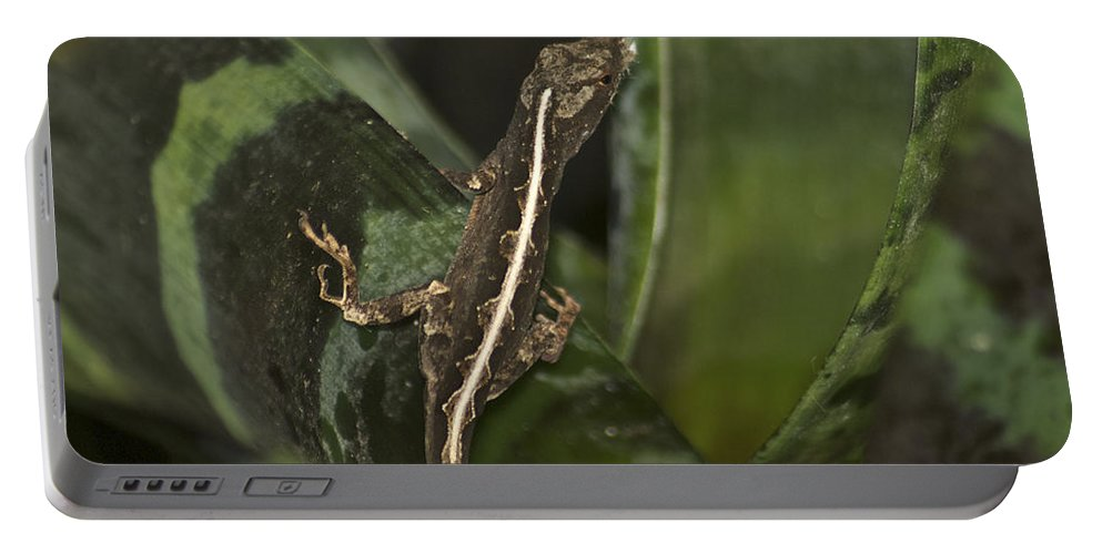 Wildlife Portable Battery Charger featuring the photograph Lizard 2 by Michael Peychich