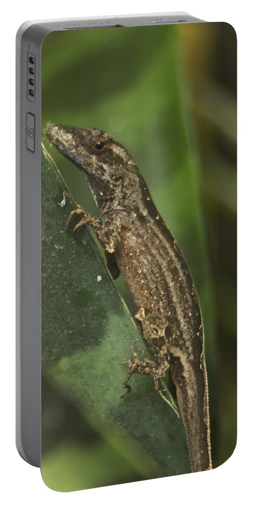 Wildlife Portable Battery Charger featuring the photograph Lizard 3 by Michael Peychich
