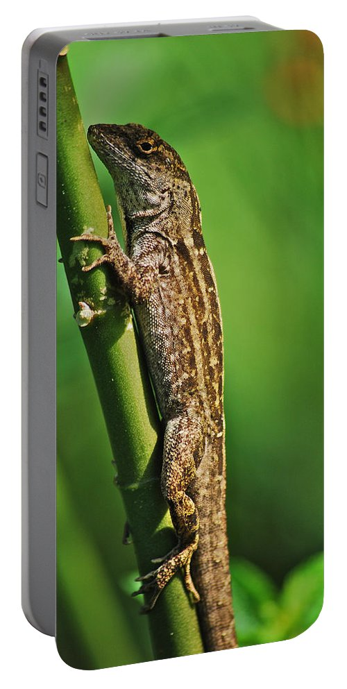 Wildlife Portable Battery Charger featuring the photograph Lizard by Michael Peychich