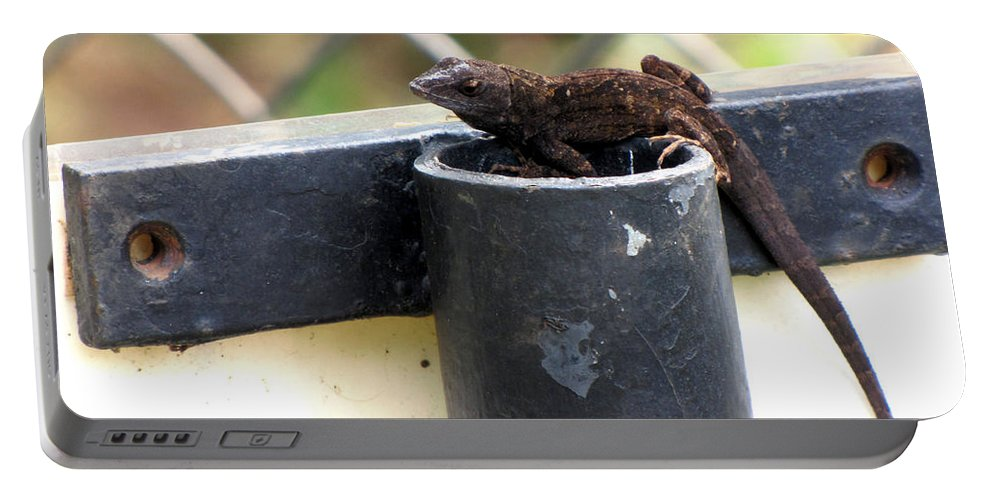 Lizard Portable Battery Charger featuring the photograph Lizard by Sarah Houser