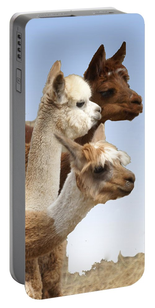 Llama Portable Battery Charger featuring the photograph Llama's Three by Heather Coen