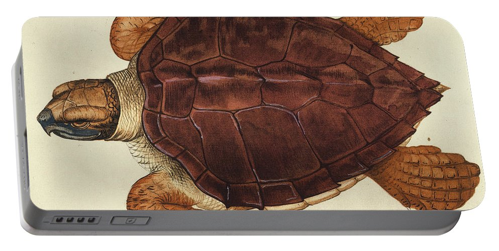 1585 Portable Battery Charger featuring the photograph Loggerhead Turtle, 1585 by Granger