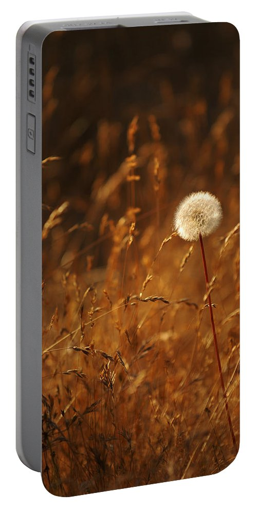 Nature Outdoors Field Dandelion Alone Single Sole Botanical Portable Battery Charger featuring the photograph Lone Dandelion by Jill Reger