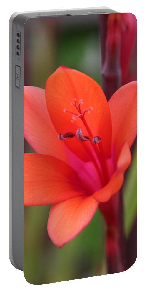 Flower Portable Battery Charger featuring the photograph Lone Flower by Holly Ethan