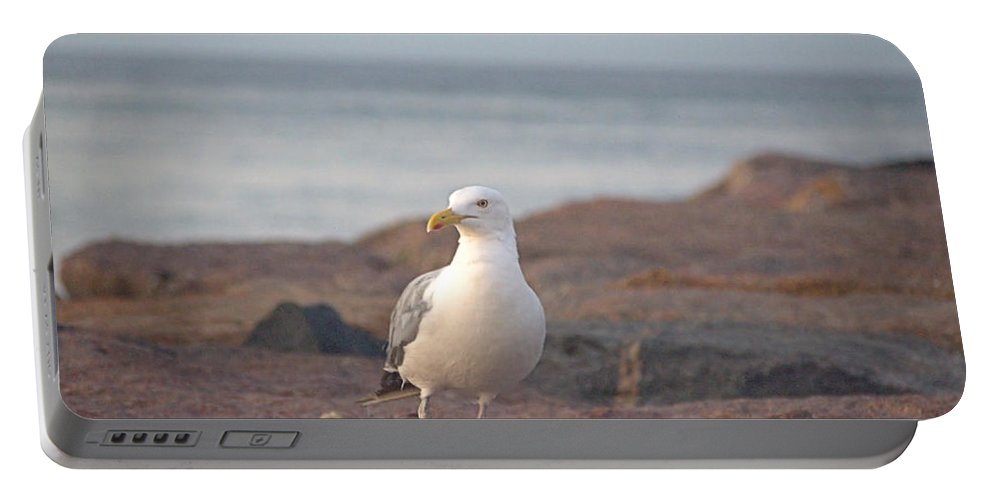 Seagull Portable Battery Charger featuring the photograph Lone Gull by Newwwman