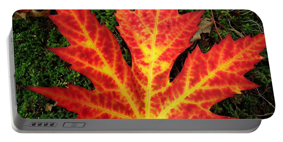 North America Portable Battery Charger featuring the photograph Lonely Leaf ... by Juergen Weiss