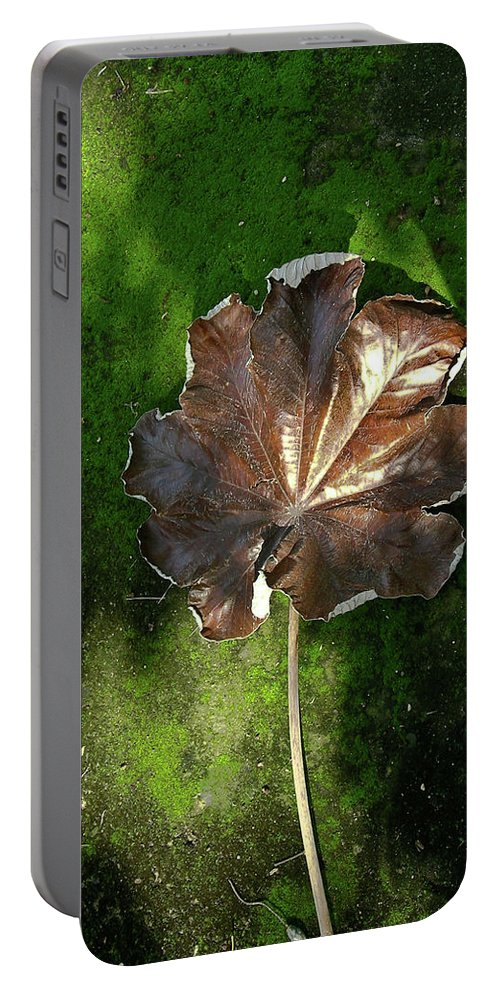Lonely Portable Battery Charger featuring the photograph Lonely Leaf On Moss by Douglas Barnett
