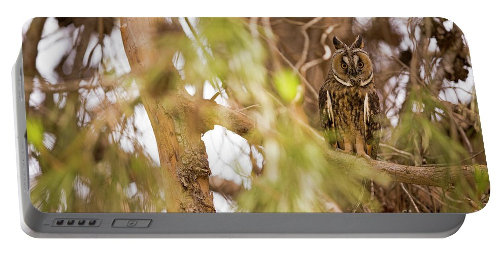 Bird Of Prey Portable Battery Charger featuring the photograph Long-eared Owl Asio Otus In A Tree by Alon Meir