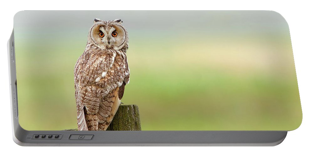 Long-eared Owl Portable Battery Charger featuring the photograph Long Eared Owl by Roeselien Raimond