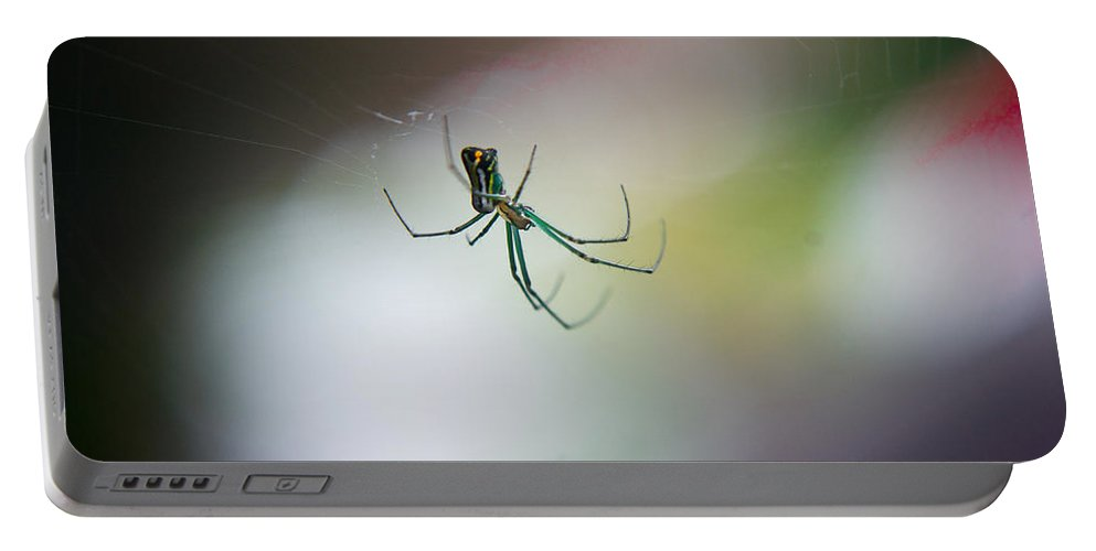 Long Portable Battery Charger featuring the photograph Long Legged Green Spider by Douglas Barnett