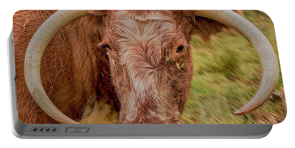 Cattle Portable Battery Charger featuring the photograph Longhorn by Nick Eagles