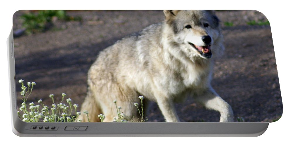 Wildlife Portable Battery Charger featuring the photograph Lonly Wolf by Marty Koch