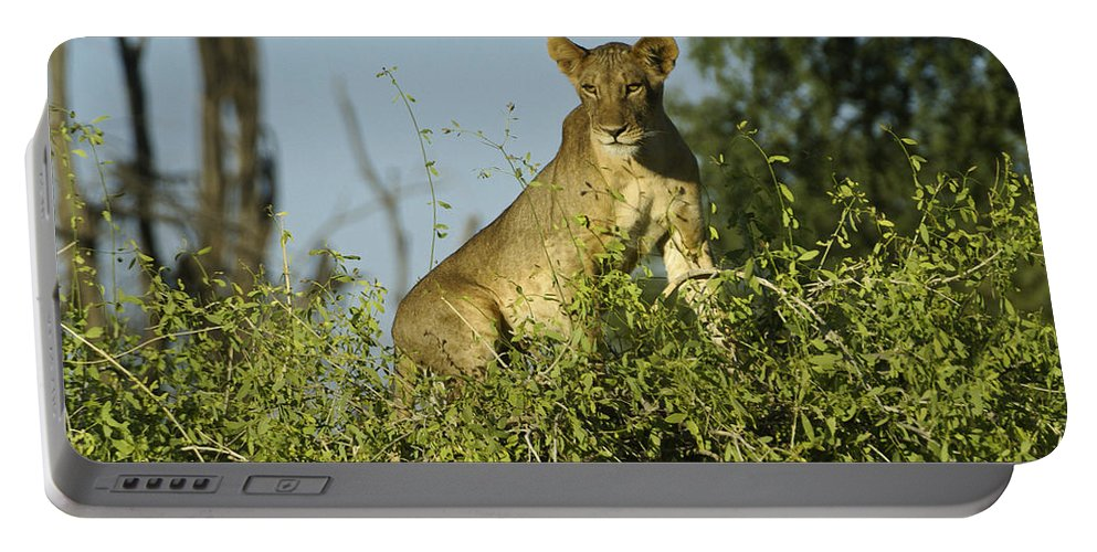 Africa Portable Battery Charger featuring the photograph Look How High I Can Climb by Michele Burgess