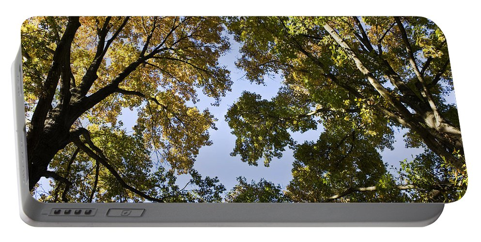 Fall Portable Battery Charger featuring the photograph Look Up by Teresa Mucha