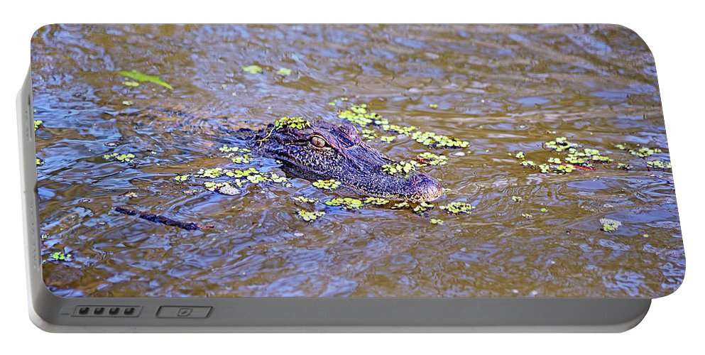 Alligator Portable Battery Charger featuring the photograph Looking For A Hand Out by Evan Peller