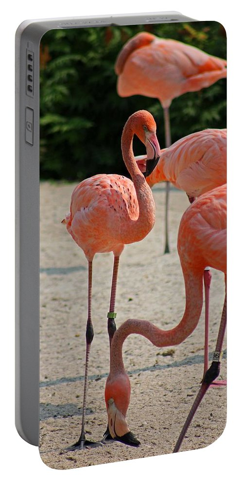 Flamingo Portable Battery Charger featuring the photograph Looking For Her Snack by Michiale Schneider