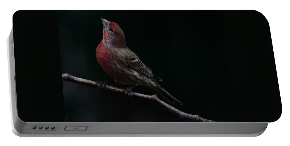 Finch Portable Battery Charger featuring the photograph Looking Towards Heaven by Gaby Swanson