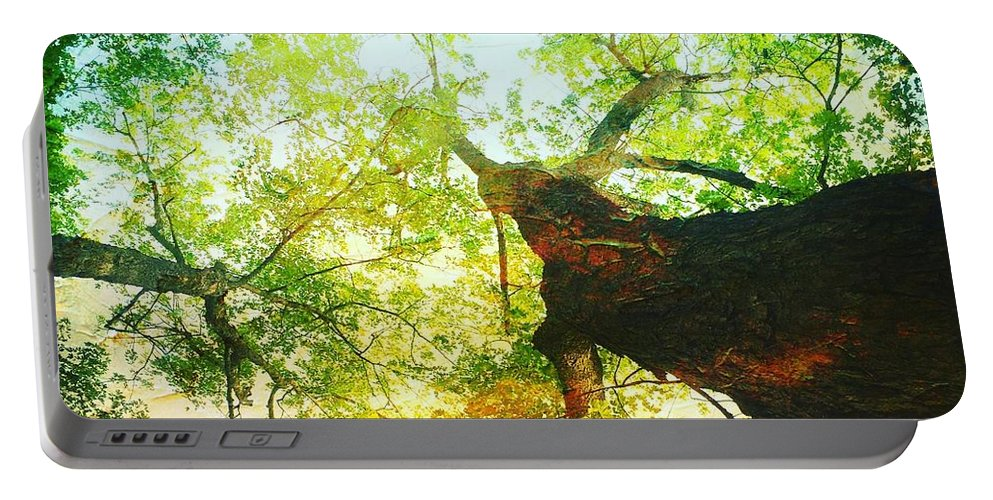 Leaf Portable Battery Charger featuring the photograph Looking Up by Modern Art
