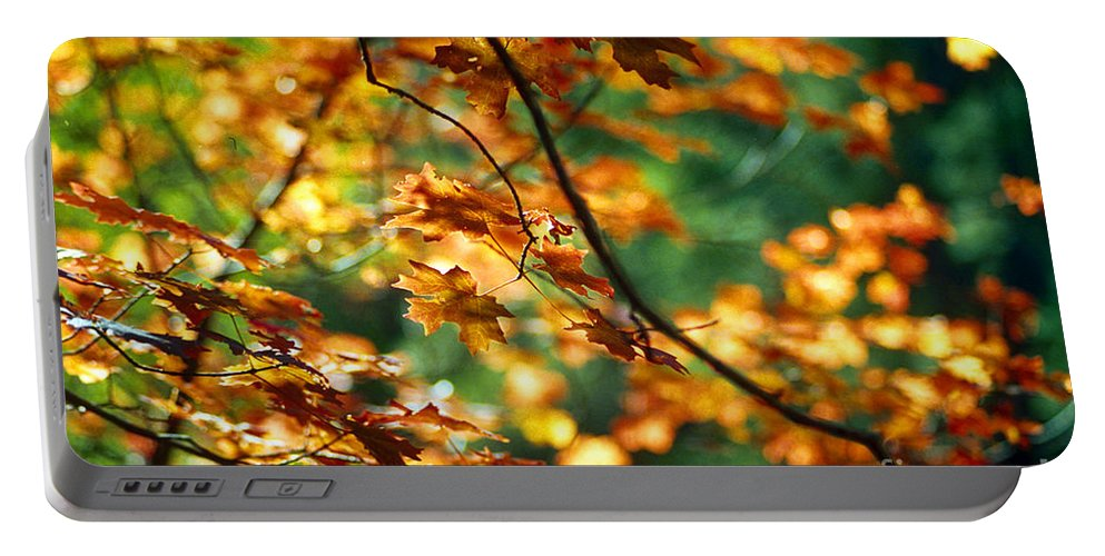 Fall Color Portable Battery Charger featuring the photograph Lost In Leaves by Kathy McClure